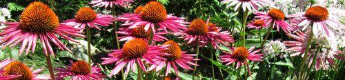 Olbrich Gardens_0019