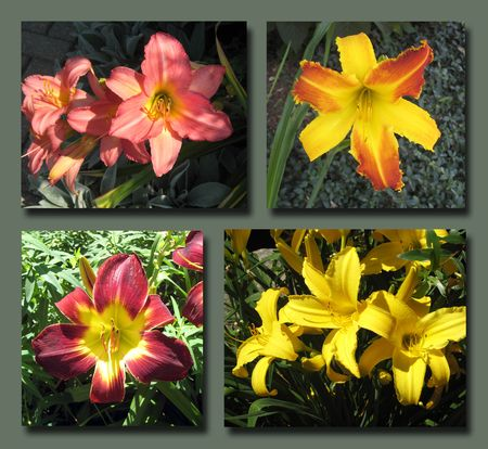 Olbrich Flower Composite 2