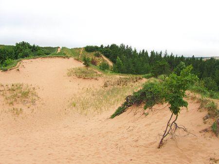 Sable Dunes_0010