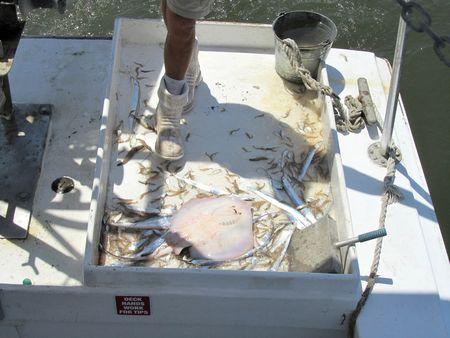 Shrimp Cruise_0024