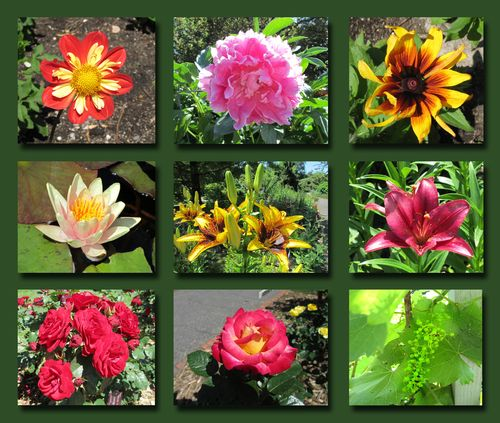 Landscape Arboretum Composite