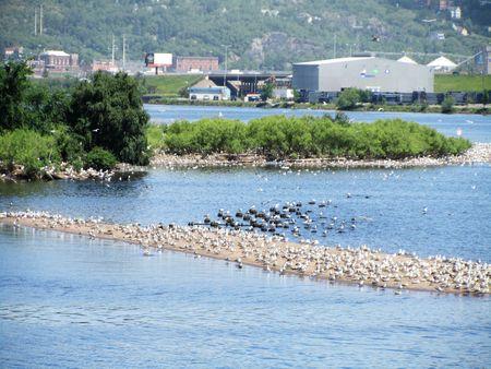 Harbor Tour_0055