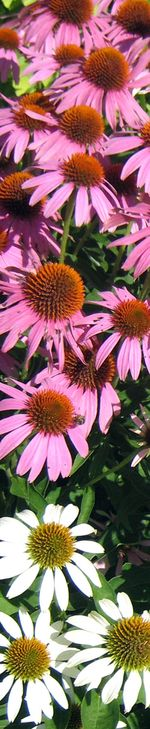 Olbrich Gardens M_0072