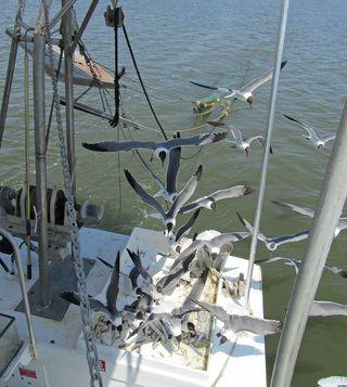 Shrimp Cruise_0044