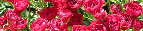 Rose Garden_0006