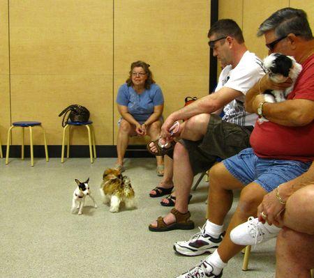 Puppy Class_0001