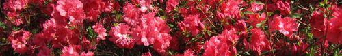 Callaway Gardens_0030