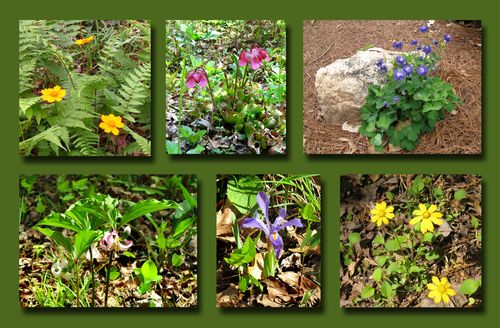 Wildflower Trail Composite