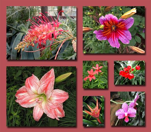 Sibley Flower Composite