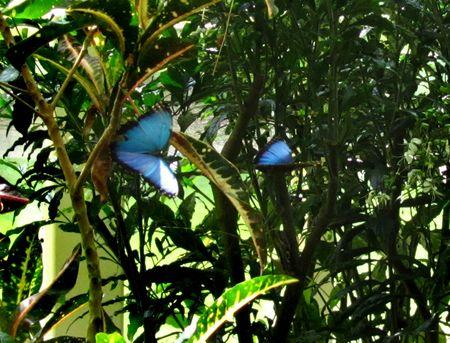 Callaway Gardens_0024