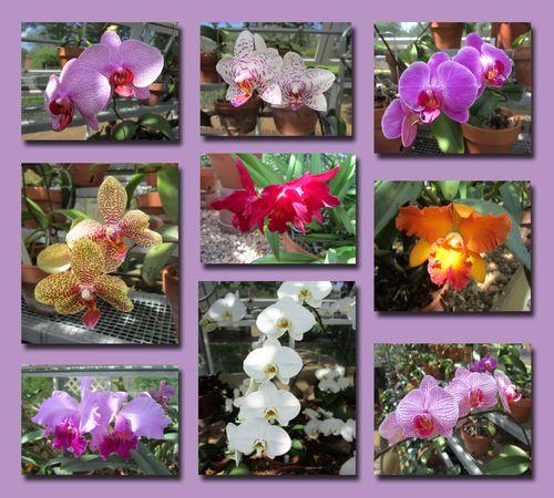 Orchid Composite