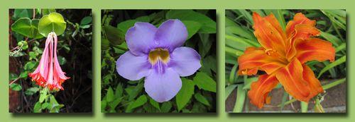 Rosalie Flower Composite copy
