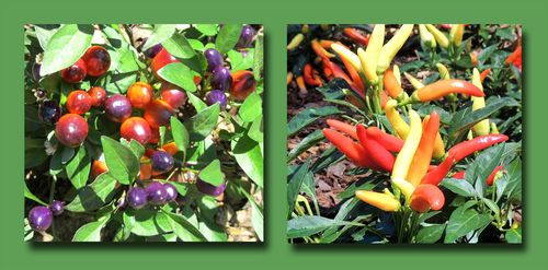 Dixon Peppers Composite