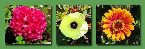 Dixon Flower Composite