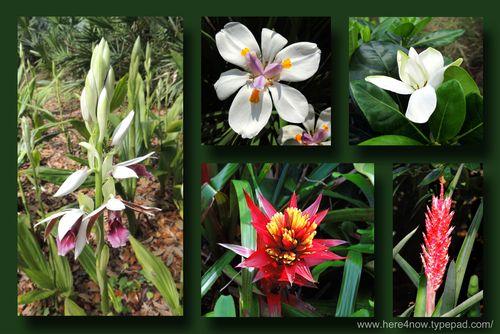 Bok Flower Composite