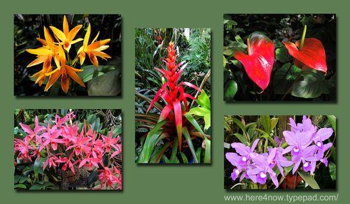 Selby Gardens Composite