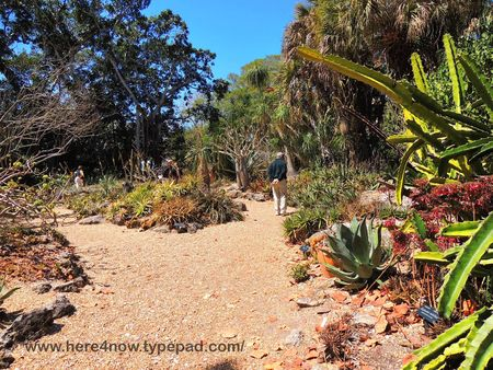 Selby Gardens_0028
