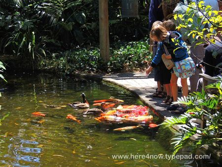 Selby Gardens_0052