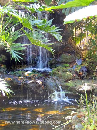 Selby Gardens_0013