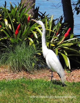 Selby Gardens_0034