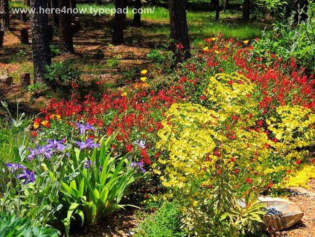 Gardens at Wildwood_0017