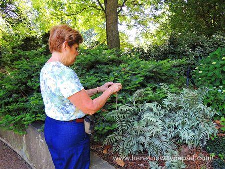 Memphis Botanical Garden_0011