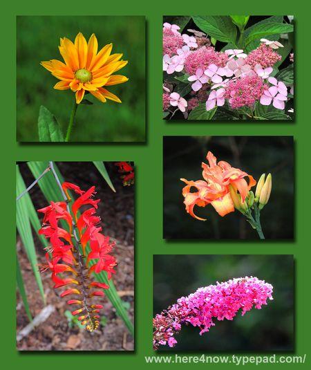 Flower Composite