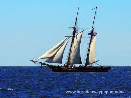 Whale Cruise_0018