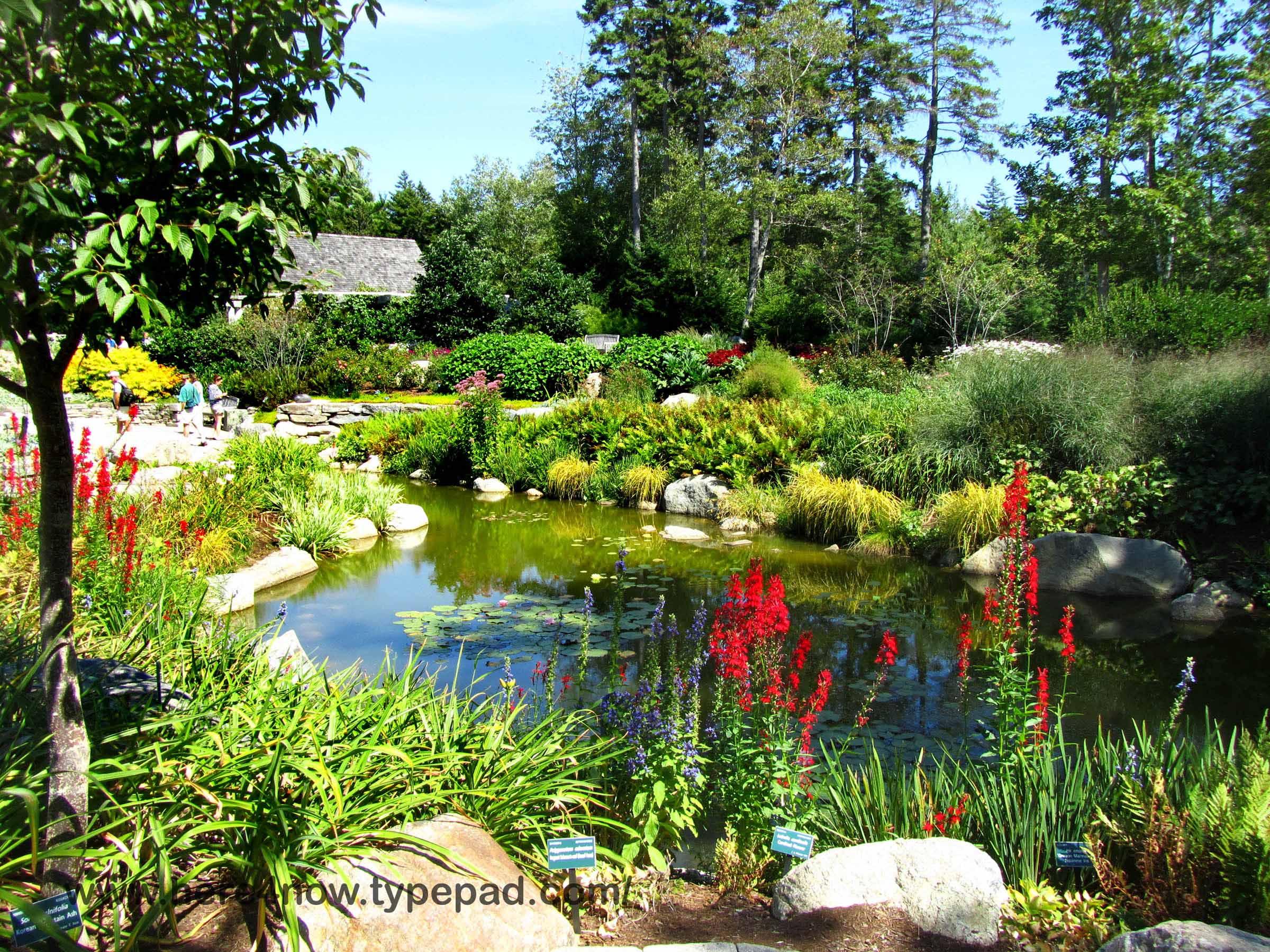 living our dream: coastal maine botanical gardens