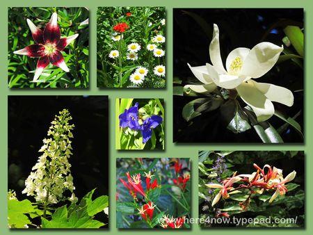 Memphis Flowers