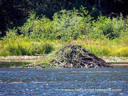 Beaver Pond_0015