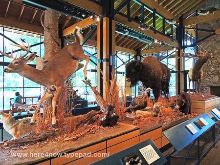 Lichterman Nature Center_0006