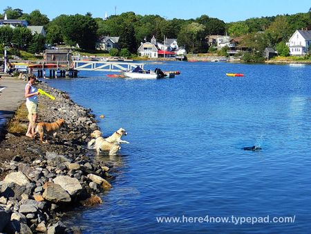 Boothbay Harbor_0132