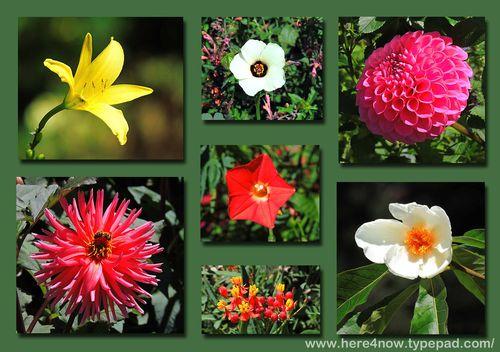 Blithewold Flower Composite