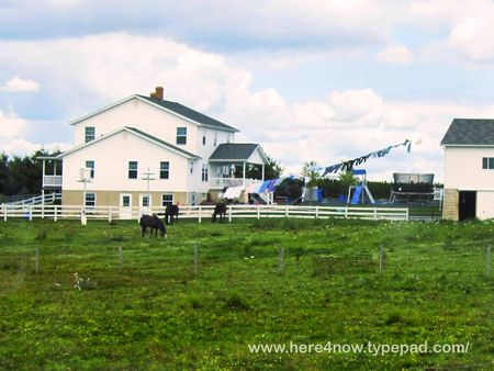 Amish Farm_0030