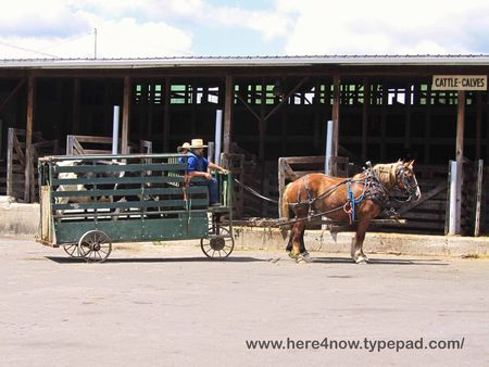 Amish Wagon_0039