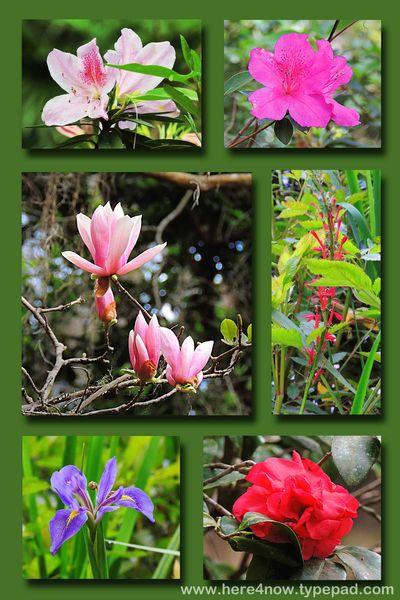 Rainbow Flower Composite
