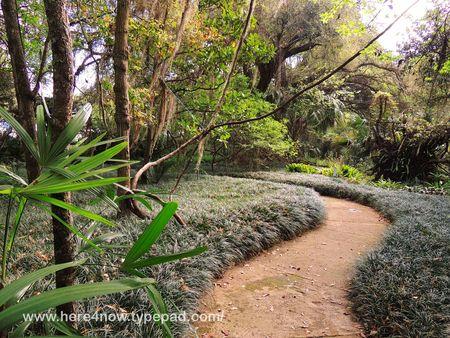 Kanapaha Bot Gardens_0029