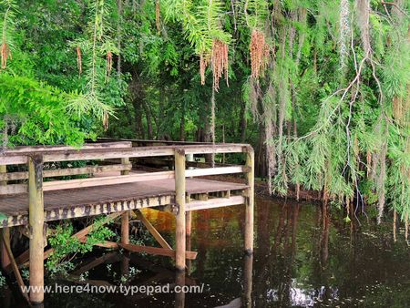Withlacoochee Trail_0007