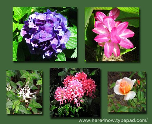 Bellingrath Flowers