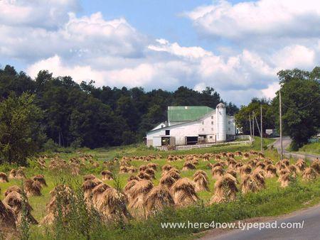 Amish Farm_0022