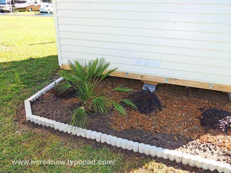Planting Fan Palm_0029
