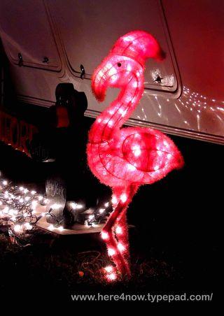 Christmas Lights_0017