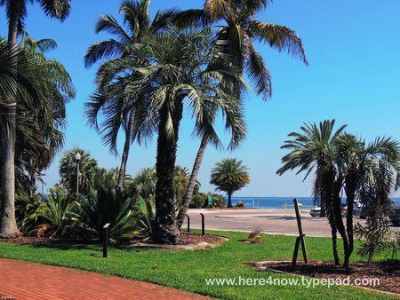 Palm Arboretum_0037