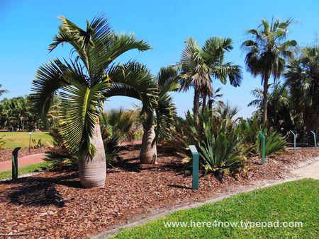 Palm Arboretum_0041