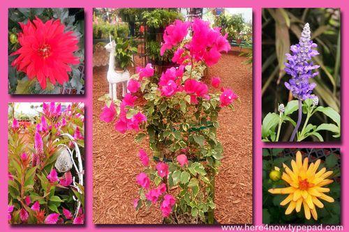 Parkesdale Flowers
