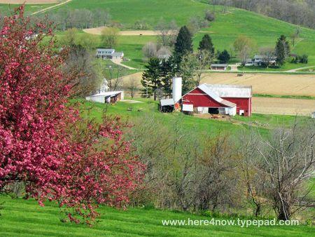 Amish Farm_0008