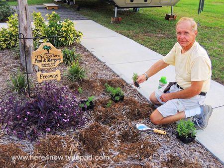 Planting Calibrachoa_0017