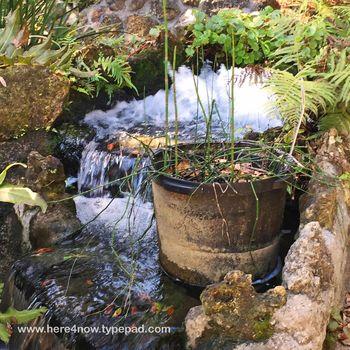 Cedar Lakes Gardens M_0079