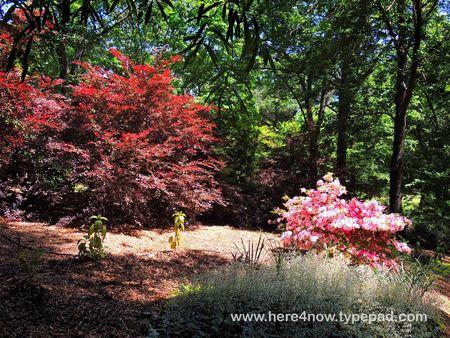 SC Botanical Garden_0026